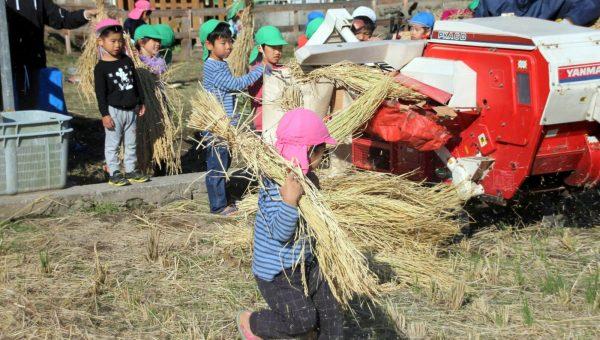 脱穀と籾摺り