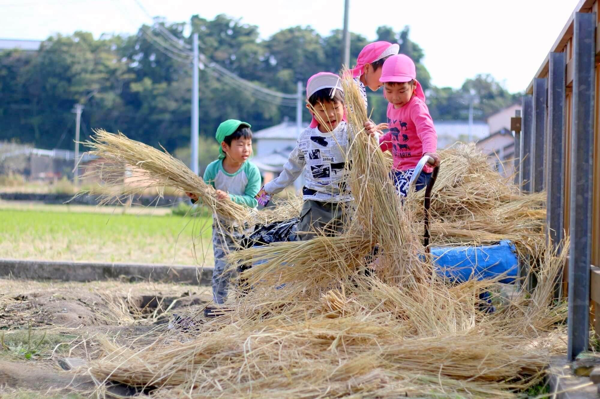稲刈り後の 藁