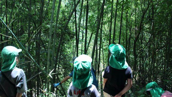 七夕の竹をとりに